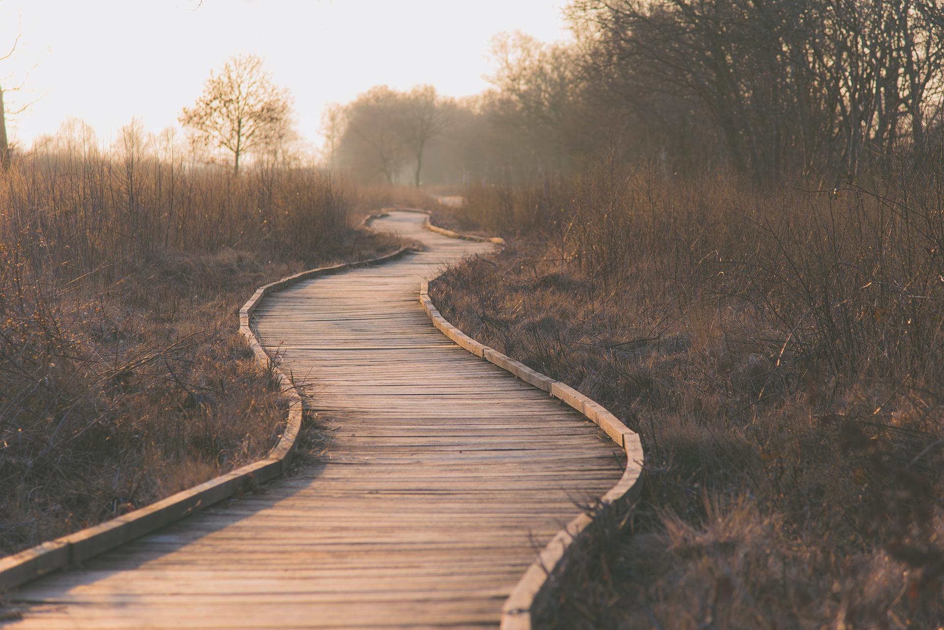Kuvituskuva: laudoitettu polku mutkittelee utuisessa metsän reunassa jatkuen horisonttiin